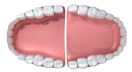 Een extreme close-up van een set van open valse menselijke tanden gezet in roze tandvlees op een geïsoleerde achtergrond