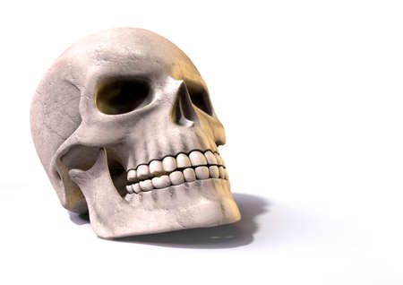 homo: A perspective view of a render of a clean human skull on an isolated white studio background