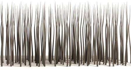 rooted: A microscopic closeup view of strands of textured hair rooted in skin on a scalp on a white background