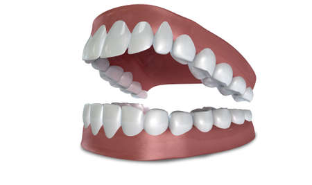 lower teeth: Seperated upper and lower sets of human teeth set in gums on an isolated background