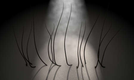 scalp: A 3D render of a microscopic closeup view of strands of textured hair rooted in skin on a scalp on a dark background Stock Photo