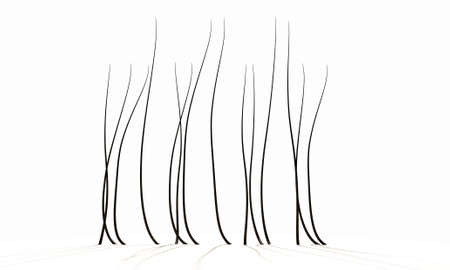 strands: A 3D render of a microscopic closeup view of strands of textured hair rooted in skin on a scalp on a white background Stock Photo