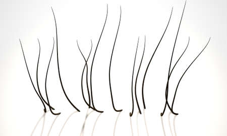microscopic: A 3D render of a microscopic closeup view of strands of textured hair rooted in skin on a scalp on a white background Stock Photo
