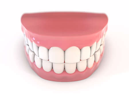 A pair of upper and lower sets of perfect human teeth set in gums on an isolated background - 3D render