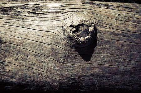 Fallen Tree at Beach Detail Фото со стока
