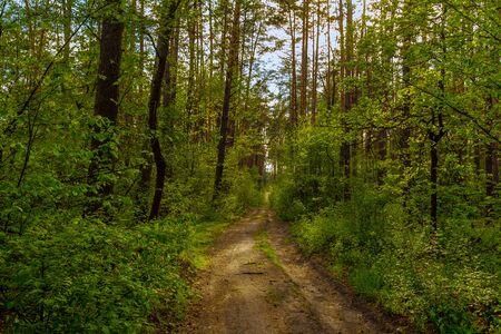 Spring forest landscape. Paths in the forest Reklamní fotografie