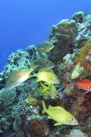 Coral Reef, Caribbean Sea, Isle of Youth, Cuba, America