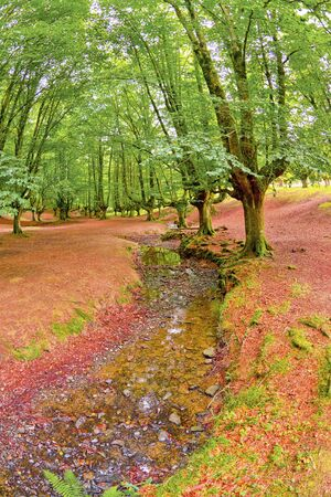 Otzarreta Beech Forest, Gorbeia Natural Park, Bizkaia, Basque Country, Spain