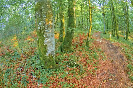 Forest Landscape, Valderejo Natural Park, Valdegovia, Alava, Basque Country, Spain, Europe 免版税图像