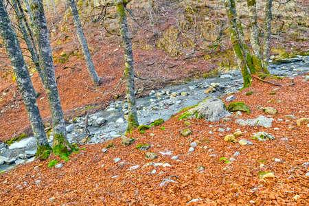 Petrechema River, Beech Forest of Gamueta, Linza Valley, Valles Occidental Natural Park, Jacetania, Pyrenees, Huesca, Aragon, Spain, Europe