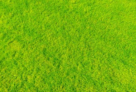 grass close up photo