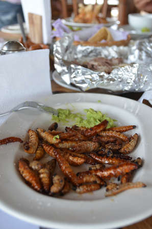 A dish of maguey worms served with guacamole
