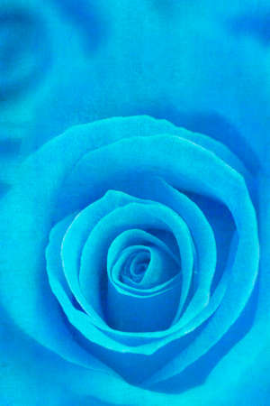 blue rose: Sweet blue rose canvas painting style Stock Photo