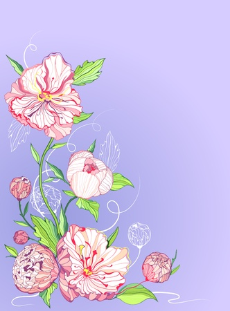 Blue background with gentle pink and white peony flowers