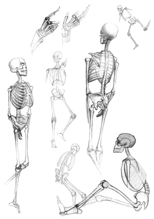 draft: Set of isolated human body parts and skeletons in different poses,like pictured by a pencil
