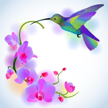 violeta: fondo de felicitación con revoloteando colibrí que lleva rama suave de hermosas orquídeas rosadas