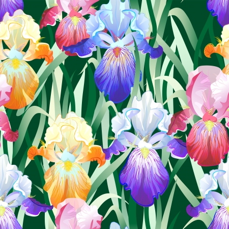 Vector seamless pattern with violet,orange and vinous Iris flowers on the white background Vector
