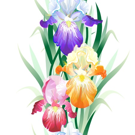 Vector seamless pattern with violet,orange and vinous Iris flowers on the white background