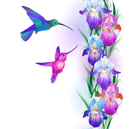 Vector seamless pattern with bright multicolored Iris flowers and hummingbirds Illustration
