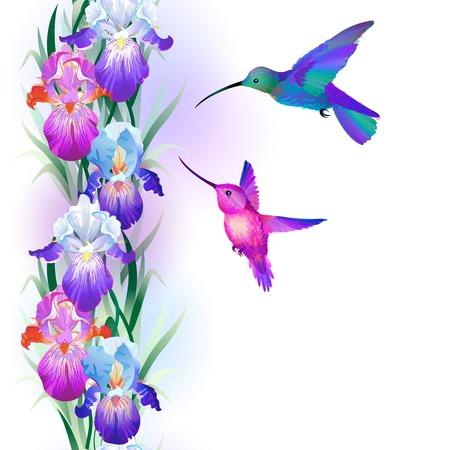 明るい多色のアイリスの花とハチドリとのシームレスなパターン  イラスト・ベクター素材