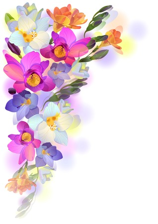Vector greeting background with pictorial freesia flowers