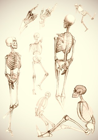 human body parts: Set of human body parts and skeletons in different poses,like pictured by a pencil