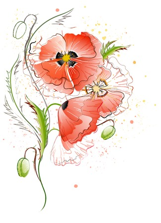 Vector greeting card with red gentle poppy flowers on the white background Vector
