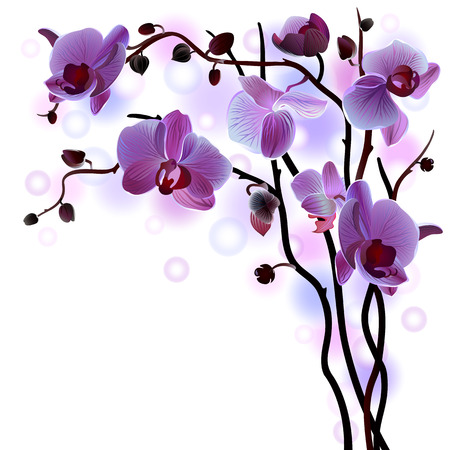 Vector greeting card with violet gentle orchid brunch on the white  Illustration