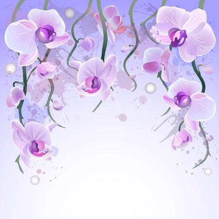 白い背景の上のバイオレットの穏やかな蘭ブランチとベクトル グリーティング カード