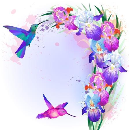 벡터 휴가 카드 밝은 여러 가지 빛깔 된 아이리스 꽃과 Hummingbirds 스톡 콘텐츠 - 27535831