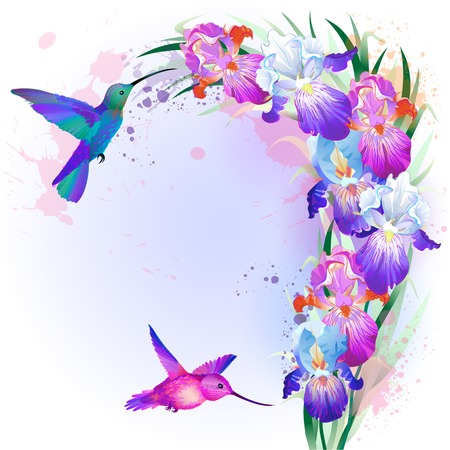 Vector holidays Card with bright multicolored Iris flowers and hummingbirds
