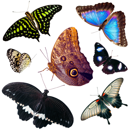 Set of isolated different types and colors butterflies photo