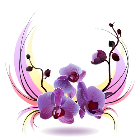 Vector greeting card with violet gentle orchid bouquet on the white background Vector