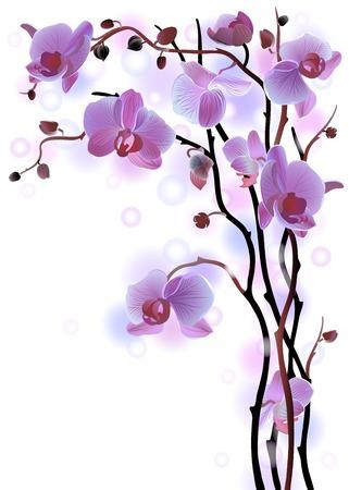 flor morada: Vector tarjeta de felicitaci�n vertical con violeta brunch orqu�deas suaves en el fondo blanco