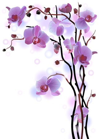 Vector vertical greeting card with violet gentle orchid brunches on the white background