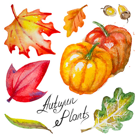 acorn tree: Set of hand drawn watercolor vector autumn pumpkins,leaves and acorns, isolated on the white background