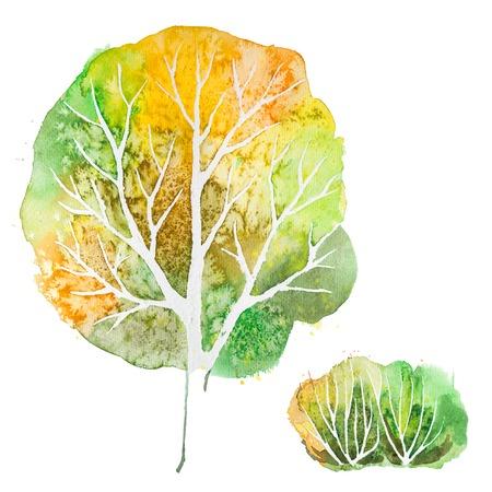 shrub: Big hand drawn watercolor green orange autumn tree and shrub, isolated on the white background