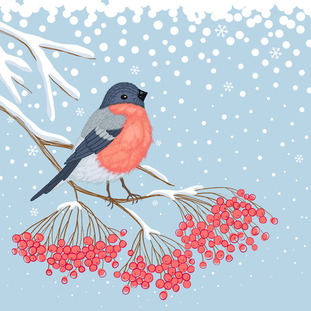 bullfinch: Winter blue snowy card with beautiful bright Bullfinch on the branch of red rowan and empty place for your text Illustration