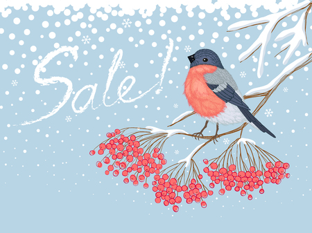 Winter blue snowy horizontal sale advertising card with beautiful bright Bullfinch on the branch of red rowan and white Sale inscription