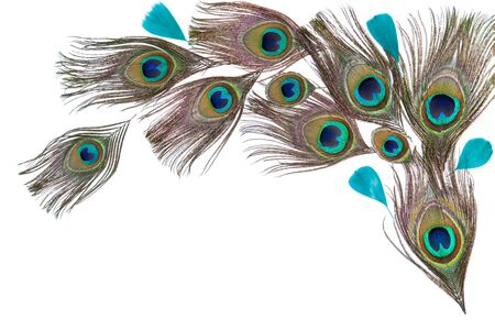 Peacock feathers on the white background