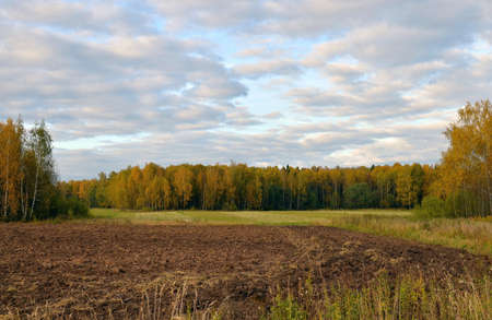 Autumn birch grove and plowed field, Kostroma region, Russia. Stock Photo