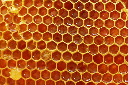 A visit to the beekeeper - honeycombs