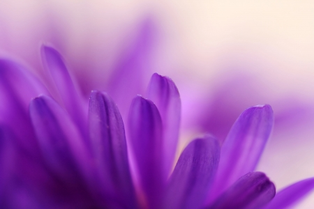 Abstract of blue petals of aster - depth of field