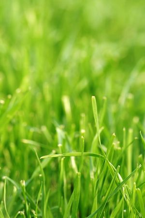 the field and in depth: Close-up of a green grass field - depth of field