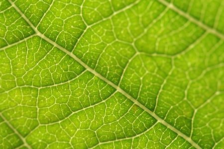 Texture, background of leaf Stock Photo - 1906815