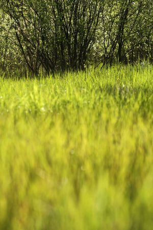 Meadow with shallow depth of field Stock Photo