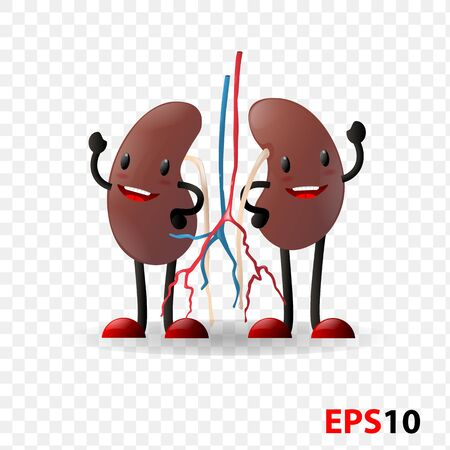 Kidneys. Human internal organ realistic isolated against transparent background. Design element for Health care,medicine,anatomy education Illustration