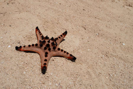 A starfish on the beach