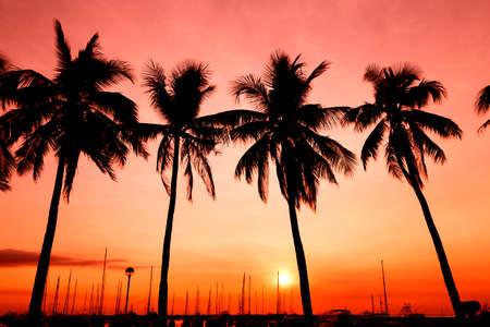 Palms in orange and pink sunset, Manila Bay, Philippines Stockfoto