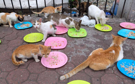 Stray cats eating at the streets of Manila